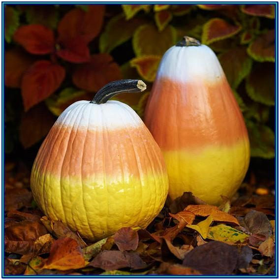 Easy Pumpkin Painting Ideas Pinterest