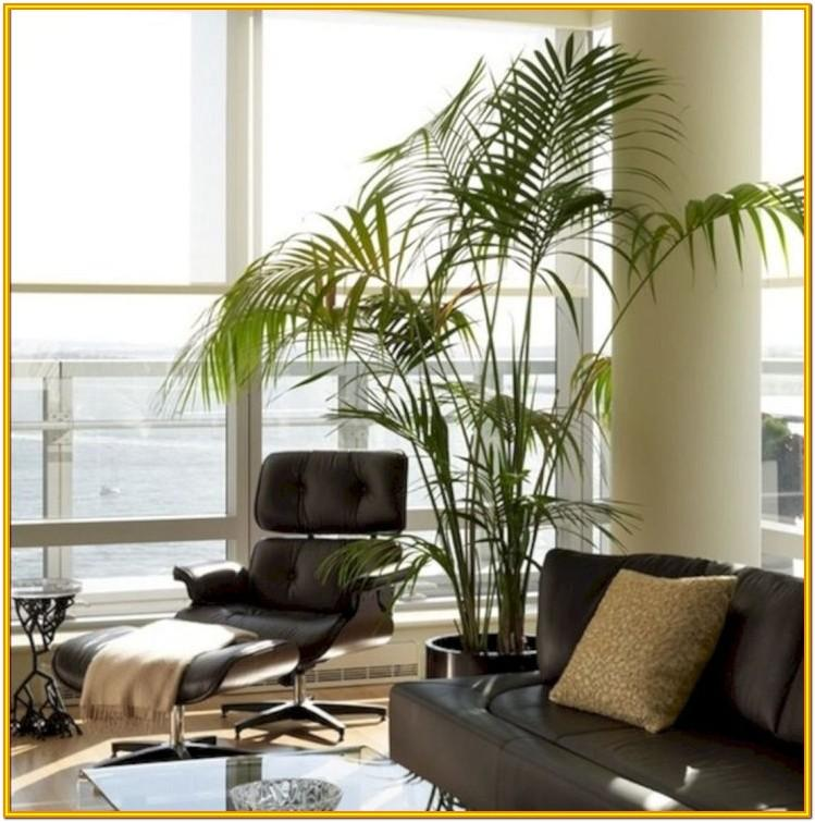 Decorating With Plants In The Living Room