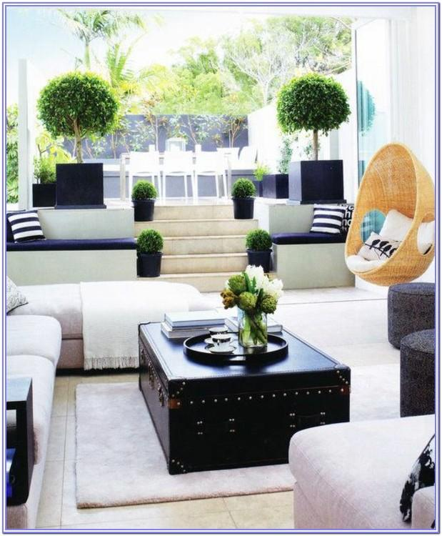 Live Plants For Room Decoration And Airyation