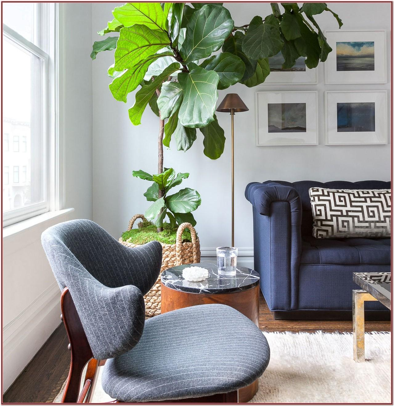 Living Room Decor Natural Plants Simple